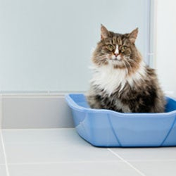 Cat Articles and How Tos