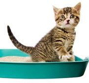 How to train a cat to use the litter box.